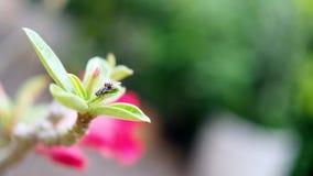 一个飞行双翅目的图象在绿色叶子的 昆虫 敌意 图库摄影
