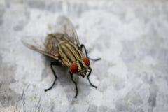 一个飞行双翅目的图象在锌金属的 昆虫动物 免版税库存照片