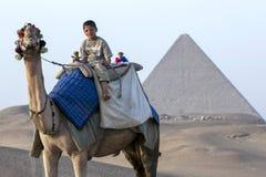 一个骆驼和车手在胡夫前面金字塔在吉萨棉在开罗,埃及 库存照片