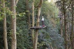 一个高站台的人在清洗一棵高大的树木的工作 免版税库存图片