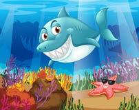 一个鲨鱼和一个海星在水下 库存图片