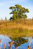 一个鸟观测所的全景,沼泽地自然公园La的Marjal在Pego和奥利瓦山脉 图库摄影