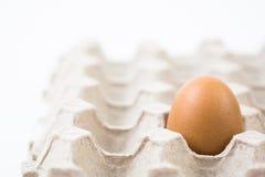 一个鸡蛋回收载纸盘 库存照片