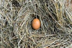 一个鸡蛋在鸡舍里 顶视图 免版税库存照片