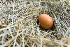 一个鸡蛋在鸡舍里 免版税库存照片