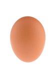 一个鸡蛋 库存照片