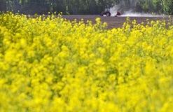 一个黄色领域在背景中犁地面的拖拉机 库存图片