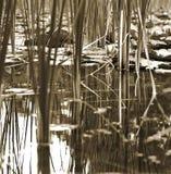 一个黑白池塘场面 免版税库存照片