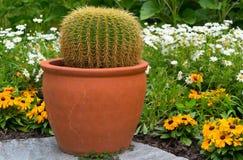 一个仙人掌的特写镜头在花背景的庭院里  免版税图库摄影