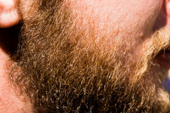 一个年轻俄国人,带红色黑色的厚实的胡子,淡光在明亮的太阳下 图库摄影