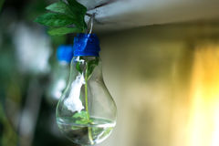 一个玻壳的装饰 一盏灯的植物有被弄脏的背景 免版税库存图片