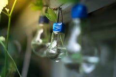 一个玻壳的装饰 一盏灯的植物有被弄脏的背景 图库摄影
