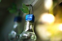 一个玻壳的装饰 一盏灯的植物有被弄脏的背景 库存图片