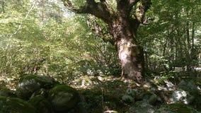 一个晴天在森林里 免版税图库摄影