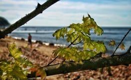 一个晴天在波罗的海 库存照片