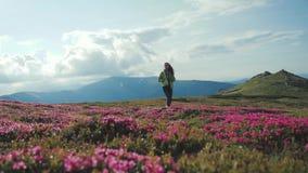 一个年轻女性游人的低角度射击有一背包单独步行的沿着向下开花的山小山 美丽 股票视频