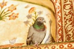 一个婴孩泰姬陵的细节有鸽子的对此 库存图片