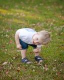 一个年轻小孩孩子户外采摘三叶草花。bo 库存图片