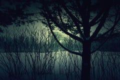 一个黑暗的场面 库存图片