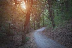 一个黑暗的森林的照片 图库摄影
