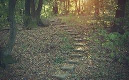 一个黑暗的森林的照片 免版税库存图片