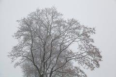 一个结构树的剪影在冬天 库存照片