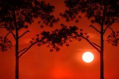 一个结构树的剪影在日落的 库存图片