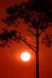 一个结构树的剪影在日落的 免版税图库摄影