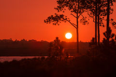 一个结构树的剪影在日落的 图库摄影