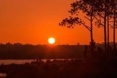 一个结构树的剪影在日落的 免版税库存照片