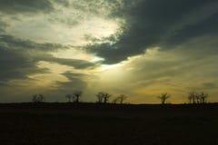 一个结构树的剪影在日落的 库存照片