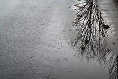 一个结构树的反映在水坑的 免版税库存照片