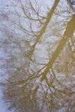 一个结构树的反映在水坑的 免版税图库摄影