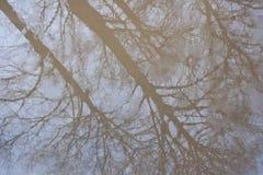 一个结构树的反映在水坑的 免版税库存图片