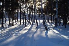 一个冻森林 免版税库存照片