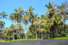 一个黑沙子海滩的棕榈树树丛,大岛,夏威夷 免版税库存图片
