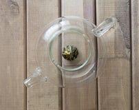 一个玻璃茶罐的顶视图特写镜头用花中国茶准备好酿造在窗口前面的木背景 库存图片