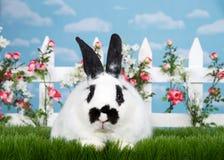 一个黑白兔宝宝的画象在花园里 库存图片