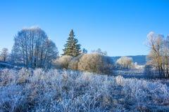 一个冻结的冬天早晨 库存照片