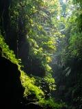 一个洞的天堂森林在瓦努阿图 库存图片
