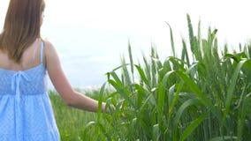 一个年轻美丽的女孩走绿色麦田,通过她移交小尖峰 影视素材