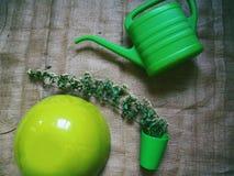 一个绿色半球、一把绿色喷壶浇灌的花的和一块绿色塑料玻璃和花一个干燥分支  库存照片