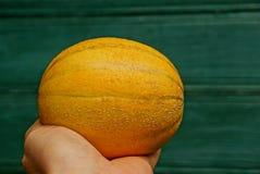 一个黄色小瓜在手的棕榈说谎在绿色墙壁的背景的 免版税库存图片