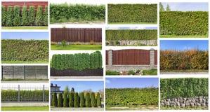 一个绿色树篱集合的片段 免版税库存照片