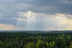 一个绿色森林的全景 库存照片