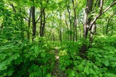 一个绿色森林的美丽的景色 免版税图库摄影