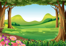 一个绿色森林 库存例证