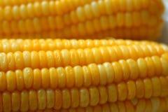 一个黄色玉米 免版税图库摄影