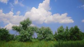 一个绿色草甸的风景有绿色树的 股票视频