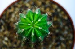 一个绿色仙人掌的宏观照片 库存照片
